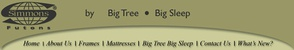 Big Tree Big Sleep logo