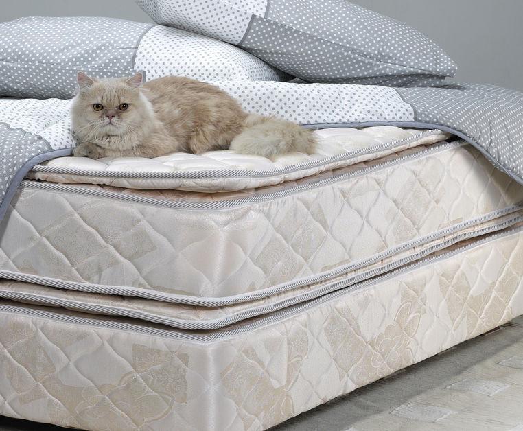 Cat on Mattress